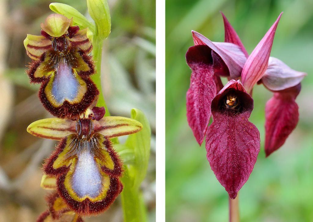 Vereniging Orchideeën Vermeerdering
